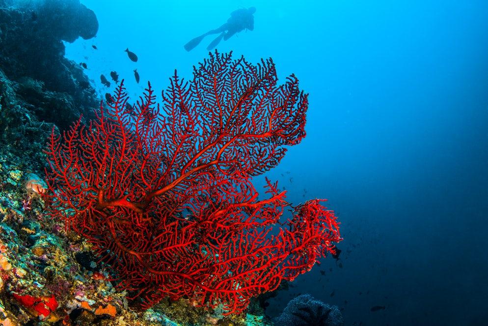 Bijoux-en-corail-rouge